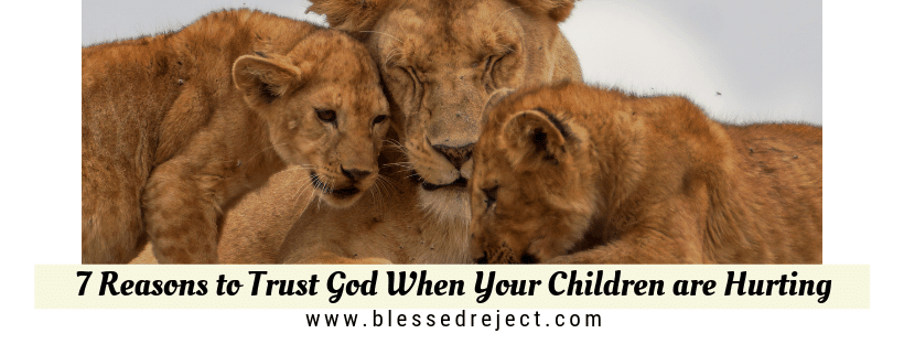 mom lion and cubs protective reasons to trust God