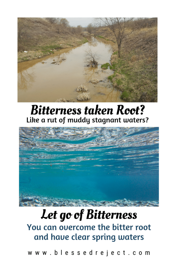 Bitterness taken root? Like a rut of muddy stagnant water? Let go of bitterness